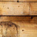 カビ取り方法で木材・畳・布について紹介!材質によって除去剤を使い分け〜壁紙についても