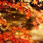 紅葉狩りと花見の違い〜意味や語源はどこから?2020年おすすめの時期